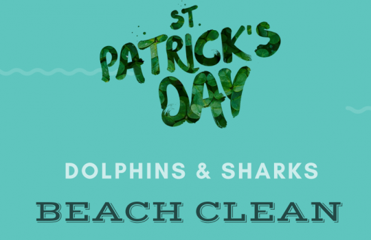Dolphins and Sharks Beach Clean